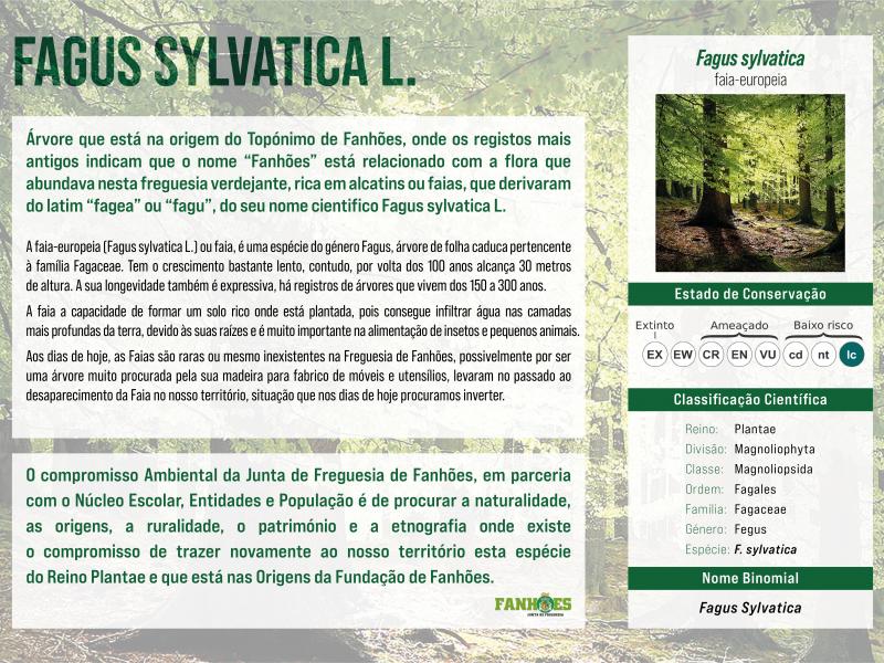 FAGUS SYLVATICA L. – Plantada no Caminho das Lavadeiras a Árvore que deu o nome ao Topónimo de Fanhões !